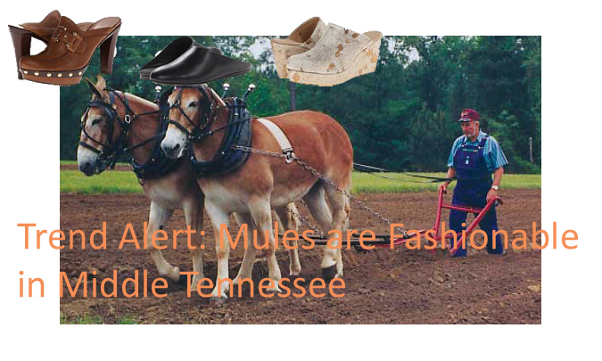 Mules Rule! A Clash of Cultures Creates a Harmony of Fun