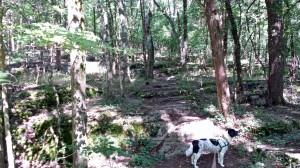 Long Hunter State Park 3